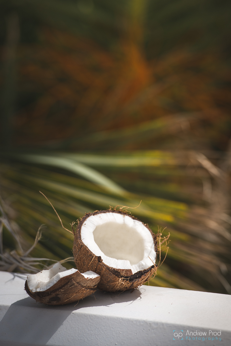 Coconut photography (1)